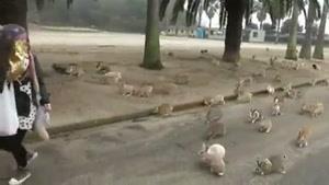 خرگوش های دوست داشتنی