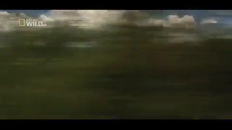 حمله وحشیانه پلنگ