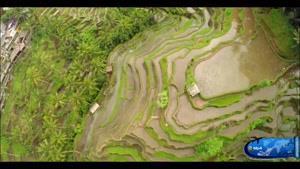 جزیره بالی در اندونزی
