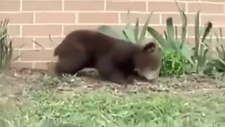 حساسیت جالب خرس