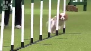 سوتی جالب سگی