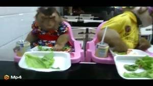 میمون هایی که مثل بچه آدم غذا می خورند
