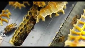 تصاویر بی نظیر از زنبور عسل !!.