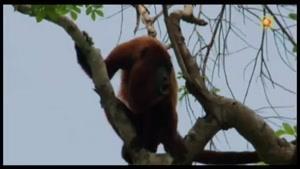 حیات وحش برزیل-۶