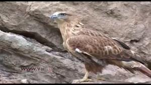 قاچاق پرندگان در استان لرستان