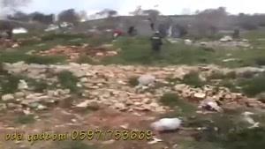 فیلم/ حمله به فلسطینی ها با سگهای هلندی