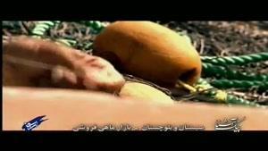پیک آشنا (سیستان و بلوچستان - بازار ماهی فروشی)