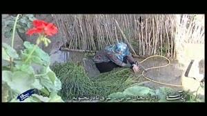 پیک آشنا (آذربایجان غربی - عرق بادرنج بویه).