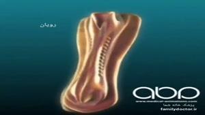 مراحل تکامل سیستم عصبی جنین