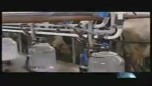 تولید کنندگان لبنیات ماست ها را کیسه کردند