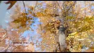 سرنوشت برگ های خزانزده