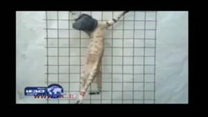 داعش، گربه ای را اعدام کرد