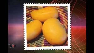 خواص میوه ها - انبه