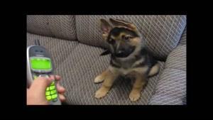 صحبت کردن سگ با تلفن