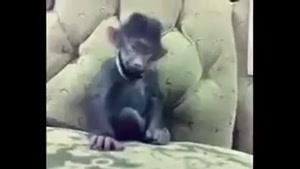 میمون خوش خنده