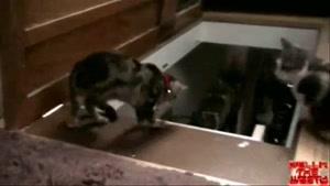 گربه ی بدجنس