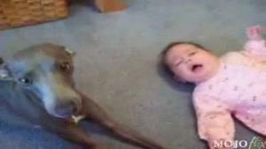 جیغ سگ از گریه ی بچه !!!!