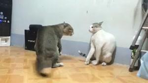 دعوای شدید گربه ای