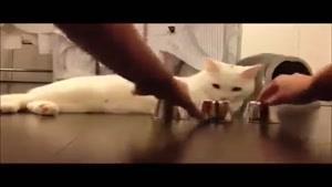 گل یا پوچ بازی کردن با گربه