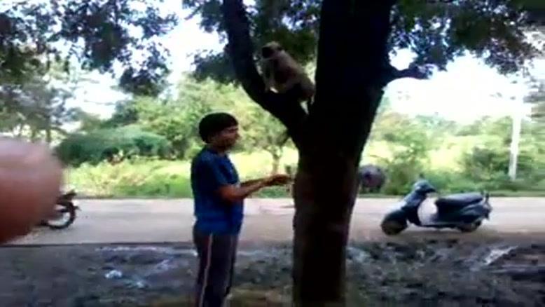 شوخی با میمون بیچاره