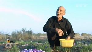 برداشت زعفران، ادویه معروف ایرانیان