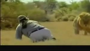 نجات یافتن یک مرد از چنگال شیر!