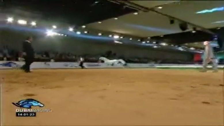 سرنوشت اسب های عرب!!