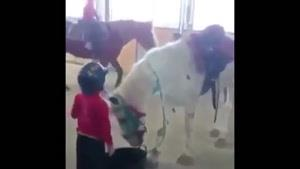 بچه زرنگ به این کوچولو میگن !