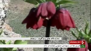 لاله های واژگون زنجان