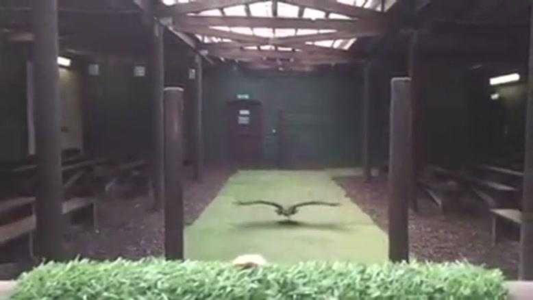 صحنه آهسته شکار جالب پرنده