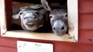 الاغ های خوشحال