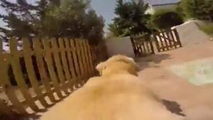 وقتی روی سگ دوربین میبندن