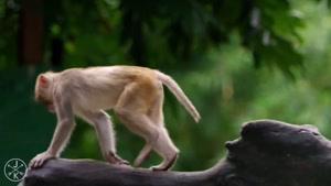 حیات وحش با تصویر( ۴K (ULTRA HD