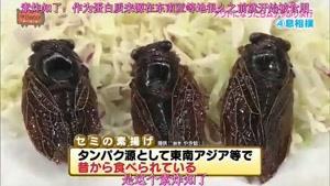 مسابقه ی سوسک خوری دختران ژاپنی !!!!