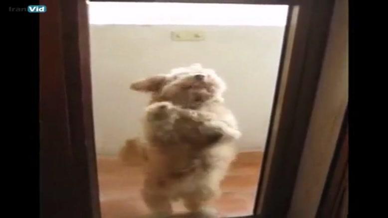 رقص سگ