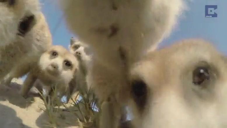 حیوانات و دوربین فیلمبرداری