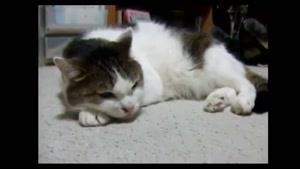 آواز خوانی گربه با گیتار