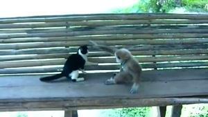 بازی گربه با میمون
