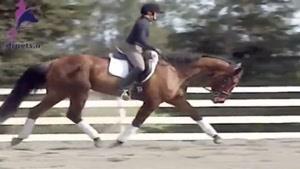 اسب با نژاد هانورین