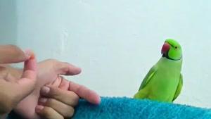 چگونه طوطی خود رابه روی انگشت بیاوریم؟؟