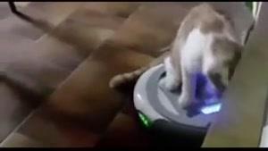 گربه ی بازیگوش