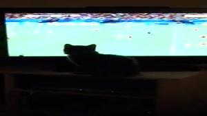 گربه عاشق فوتبال