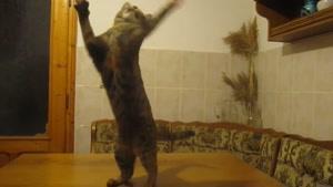 شیطون بازی گربه