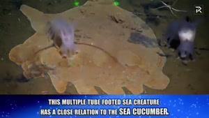 موجودات دریایی
