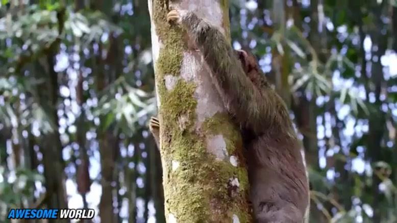 حیوانات شگفت انگیزند ...
