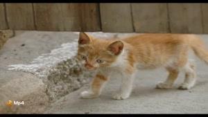 داستان کوتاه - گربه پیر زال