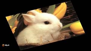 داستان کوتاه - خرگوش باهوش