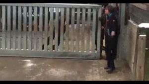 کرگدن وحشی در باغ وحش آشوب به پا کرد