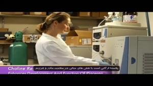 نقش های حیاتی کولین در بارداری و سلامت خانم ها