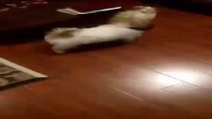 حرکات بامزه ی حیوانات